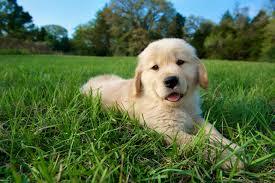 puppy outside
